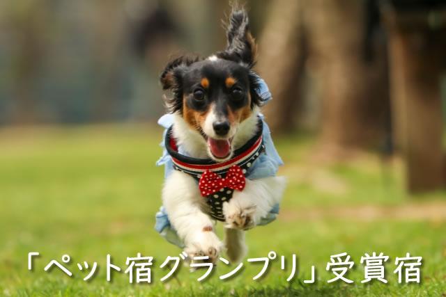 「ペット宿グランプリ」受賞宿