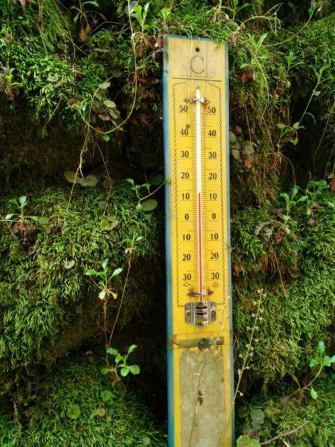 5月初旬 川床の気温は13.5度