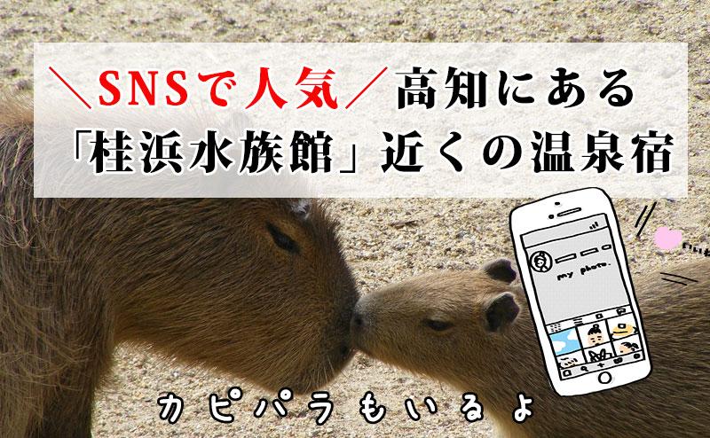 SNSで人気高知にある 「桂浜水族館」近くの温泉宿